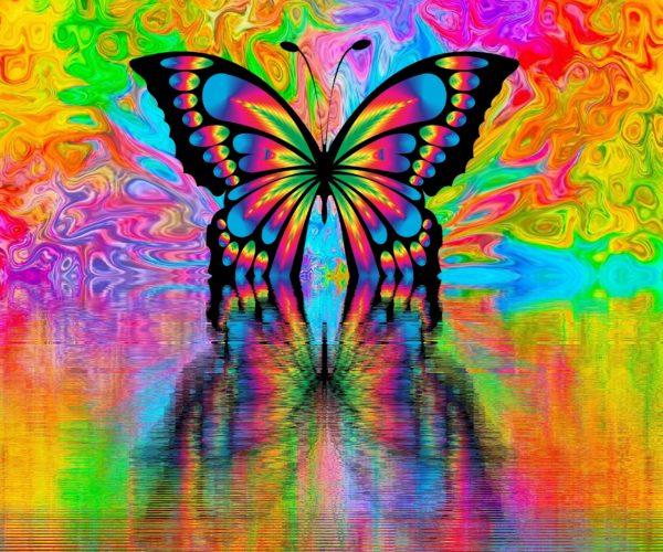 butterfly-2071329_1920